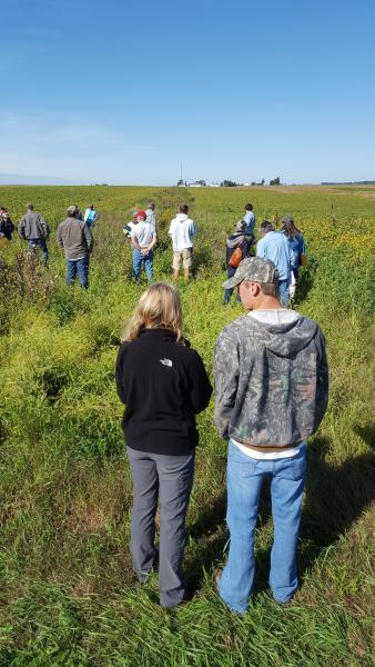 Participants learn about and walk through an in-field prairie strip.